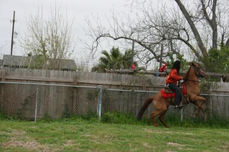 horsebuking